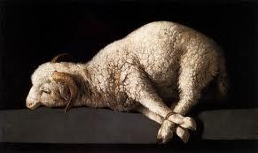 bound lamb